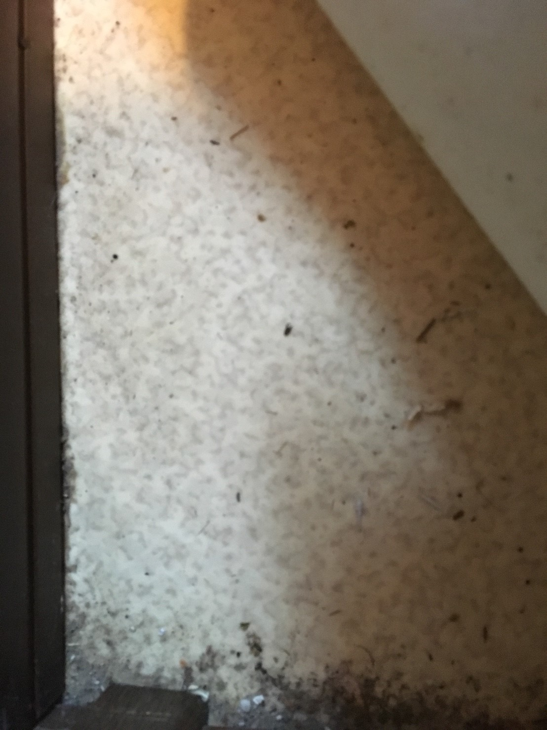 前橋市 トイレ